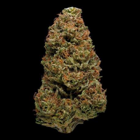 Fleur CBD pas cher Harlequin 15,9%