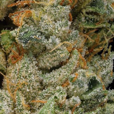 Fleur CBD Cannatonic 21,2%