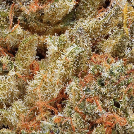 Flower CBD ACDC 19,1%