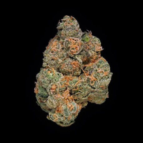 Mango Kush Flower 23.7%.