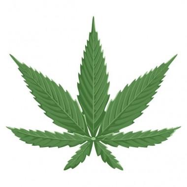 différence chanvre et cannabis